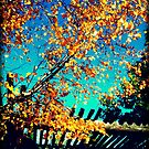 Pergola by Oranje