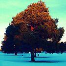 Last Light by Oranje