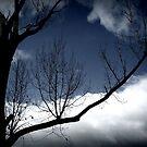 Storm by Oranje