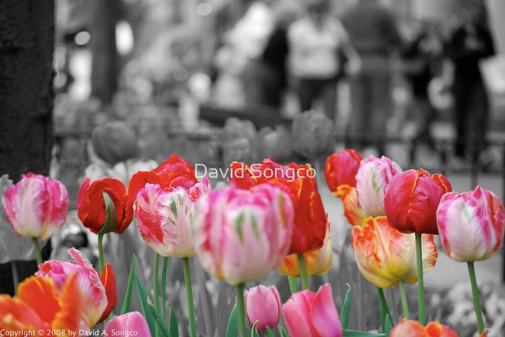 Michigan Avenue Tulips by David Songco