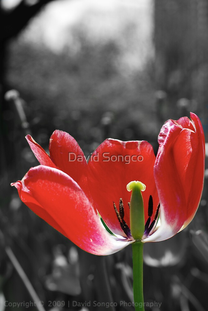Lone Flower by David Songco