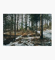 Through the forest Photographic Print