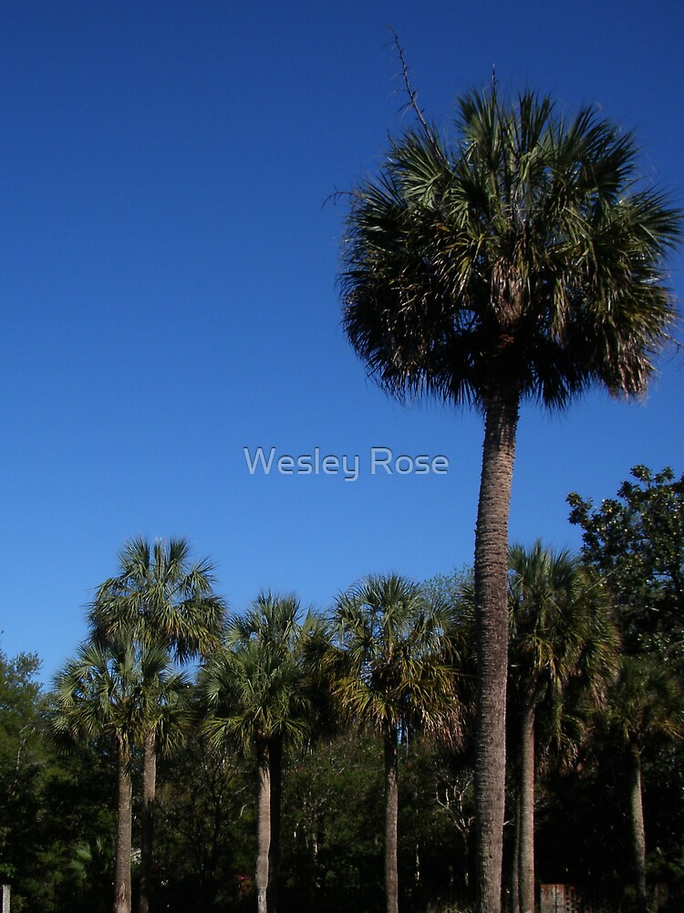 Lonely Palm by Wesley Rose