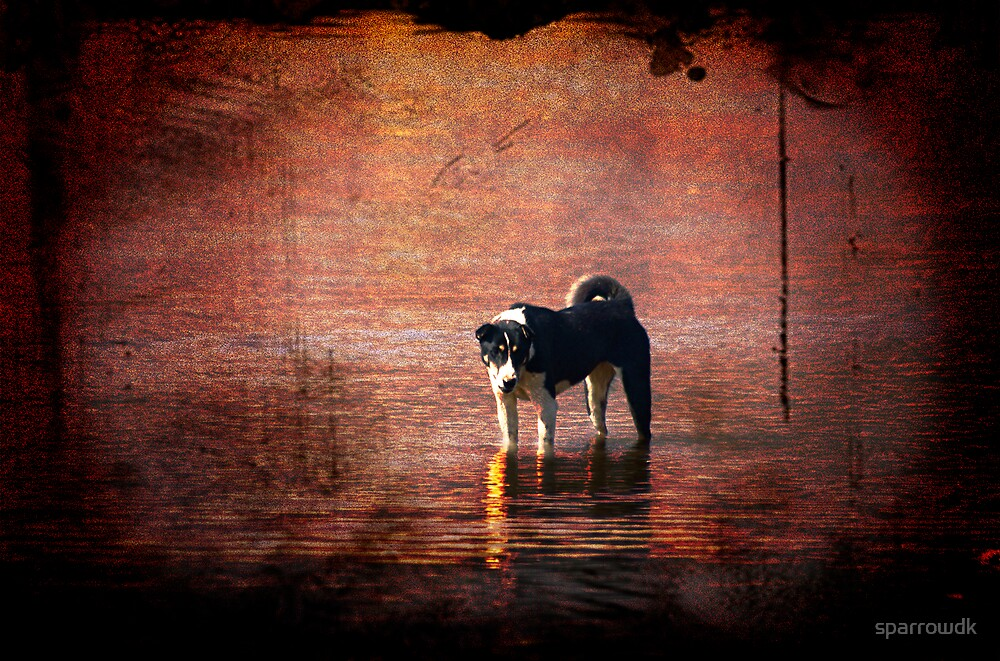 water dog by sparrowdk