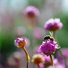 Honey by duncandragon