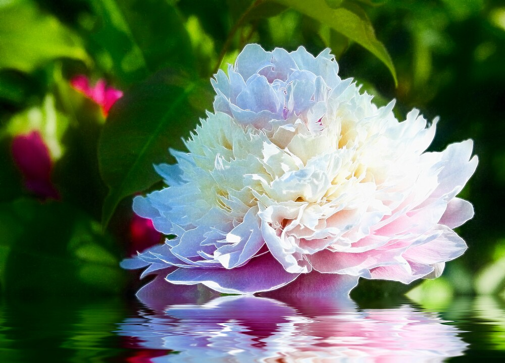 Sundae Peony by Trudy Wilkerson