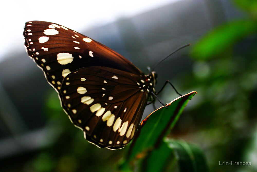 Butterfly house by Erin-Frances