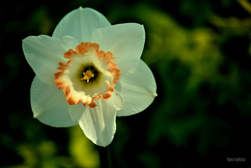 Beautiful White Flower by terrebo
