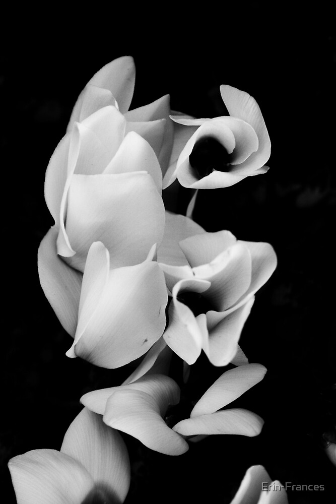 Shadows by Erin-Frances