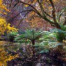 The Magic Garden by Alex Stojan