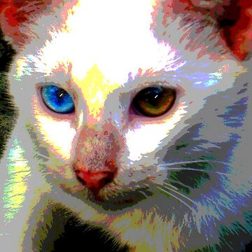 My blue-eyed kitty by angeloaguinaldo