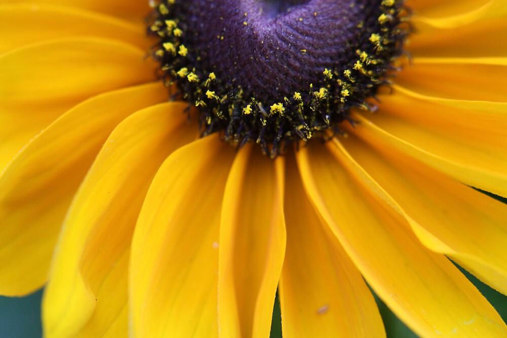 Flower study II.243 by Colleen Salls