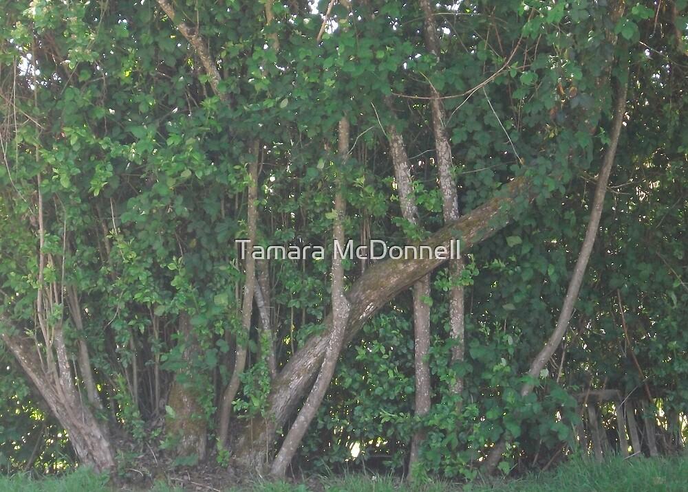 Through the Trees by Tamara Lindsey