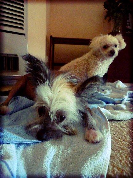 Gambit & Teddy.. by xTRIGx
