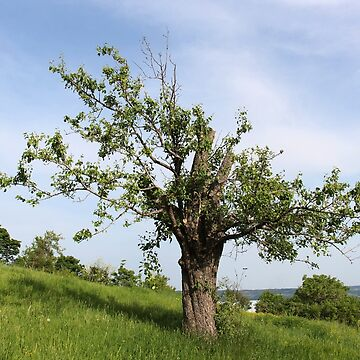 A Tree With a View in Romania by ZipaC