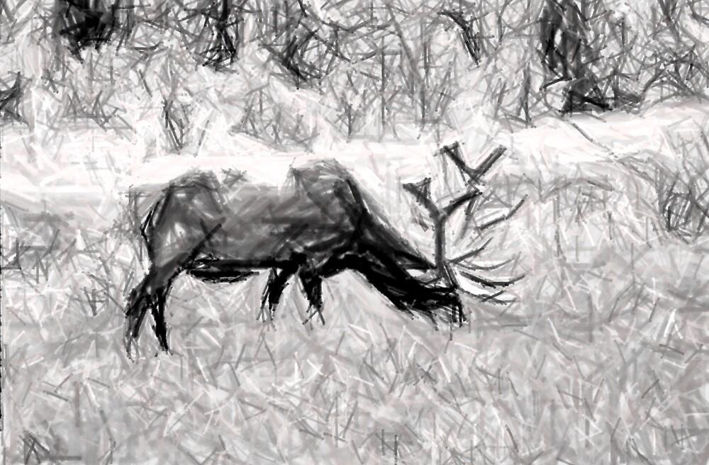 Elk by Joshua Smith