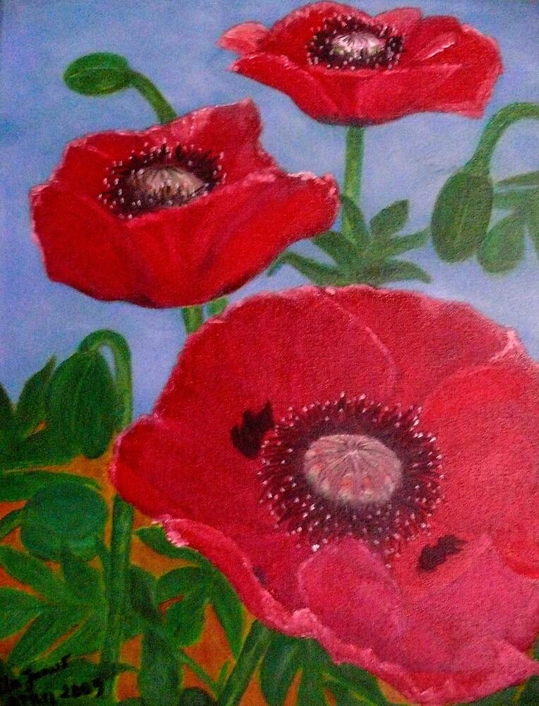poppy flowers by elajanus