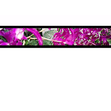 Botanica 1 by cathysola