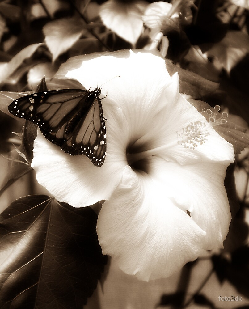 Diffused Flower 4 by foto3dk