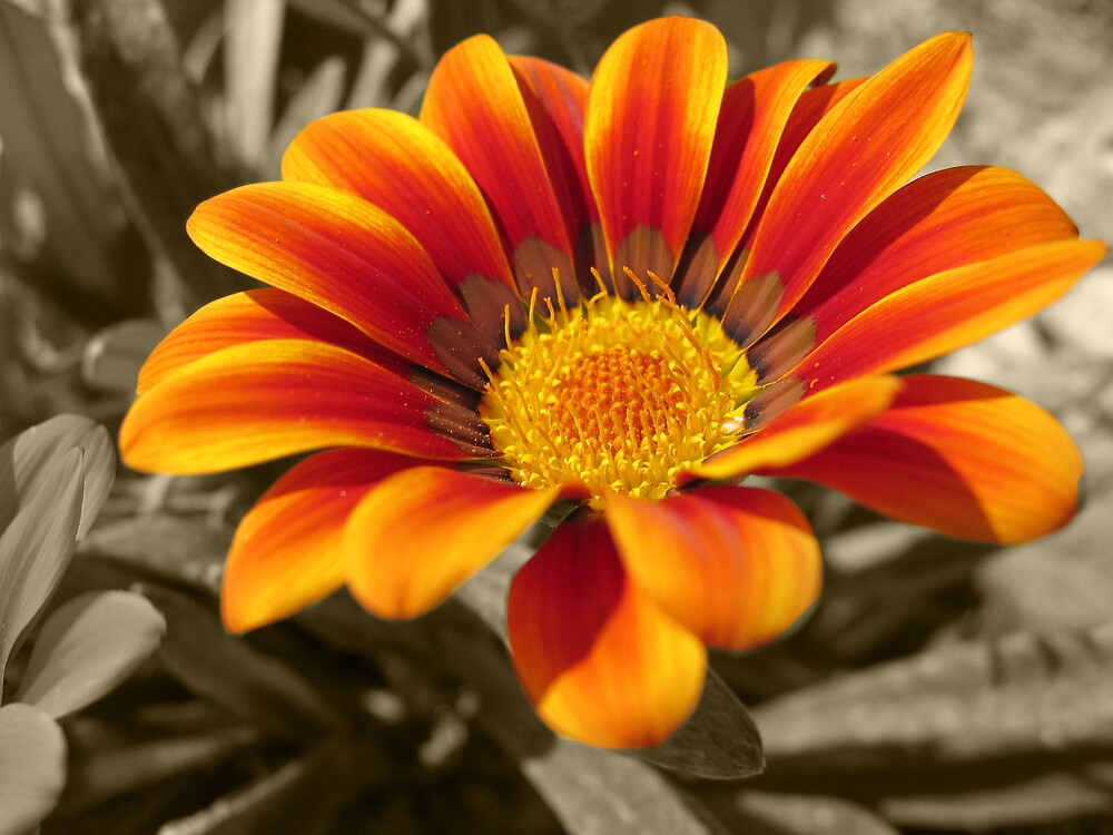 Orange Flower by Quinton Smith