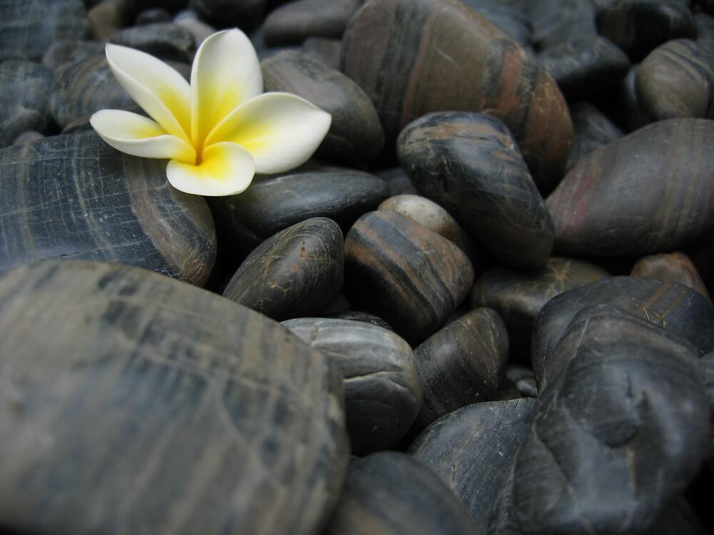 Frangipani black rocks 1 by Quinton Smith