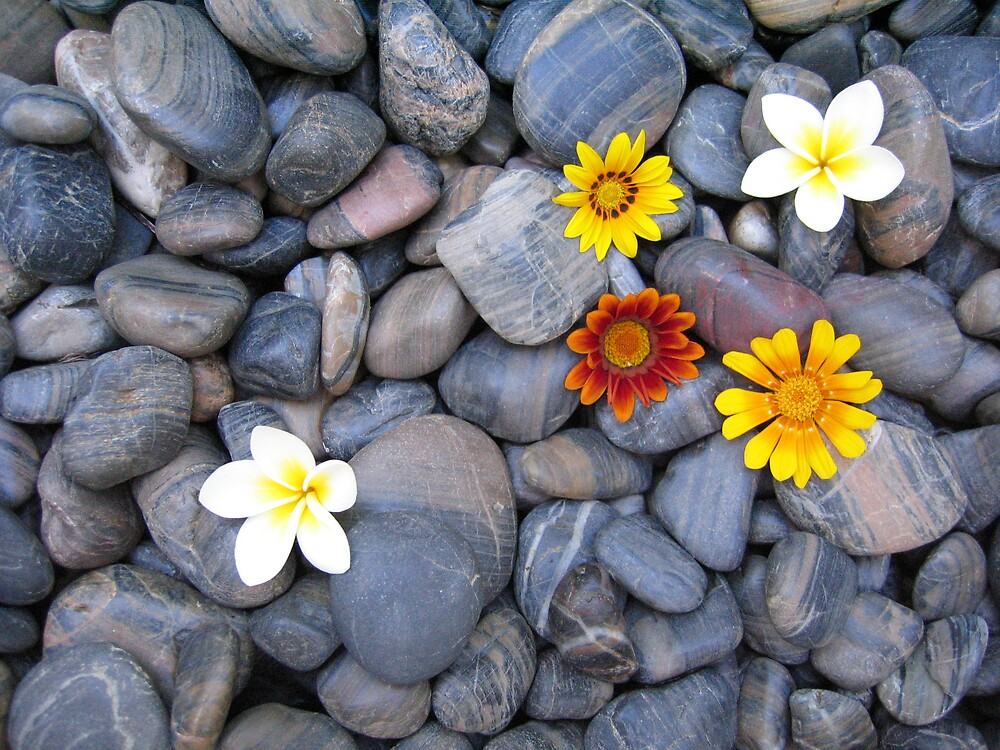 Flowers blackrock by Quinton Smith
