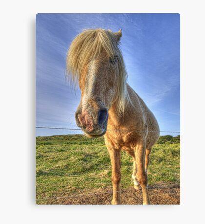 Longis Horsey - Alderney Canvas Print