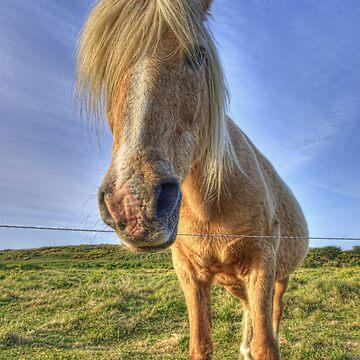 Longis Horsey - Alderney by NeilAlderney