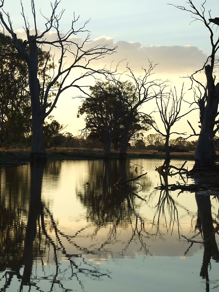 Reflections by Brianna  Campbell