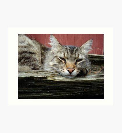 CAT IN THE CRADLE Art Print