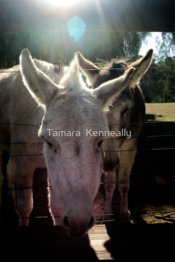 Big Ears by Tamara  Kenneally