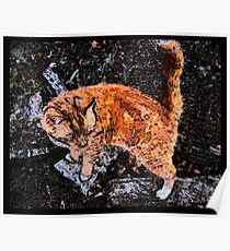 Orange Cat With White Boots Poster