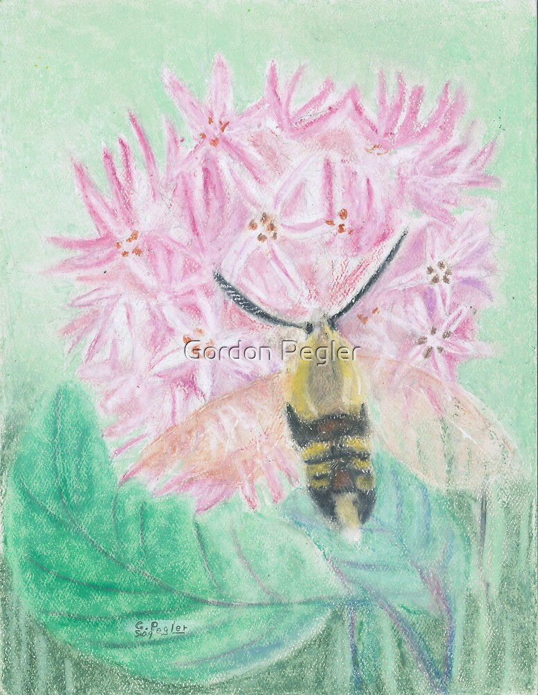 Bumbel bee moth on milkweed bloom-oil pastels by Gordon Pegler