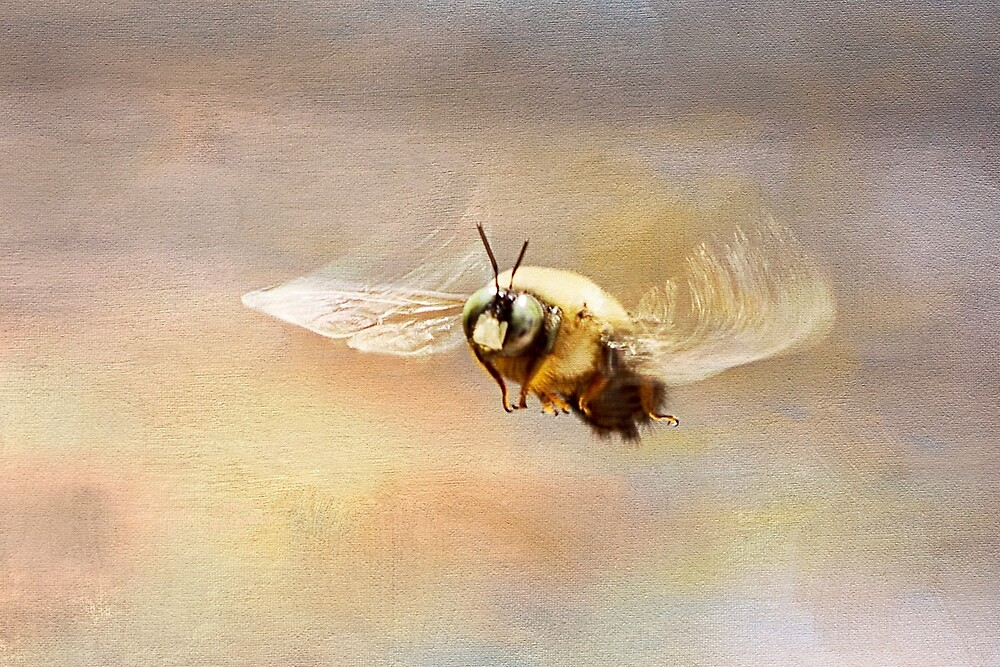 Hovering Carpenter Bee by Patricia Montgomery