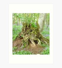 Rooted to the Spot Art Print