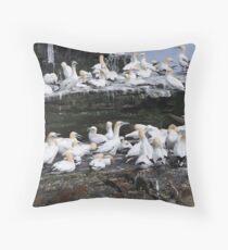 Gannets on Noss, Shetland Throw Pillow