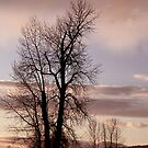 As the Day Ends by MaluC