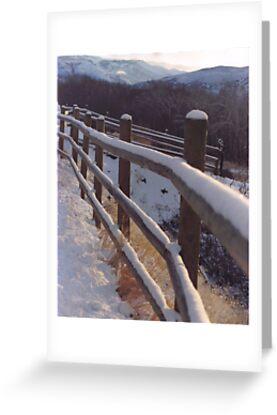 Winter Fence by Paula Thompson