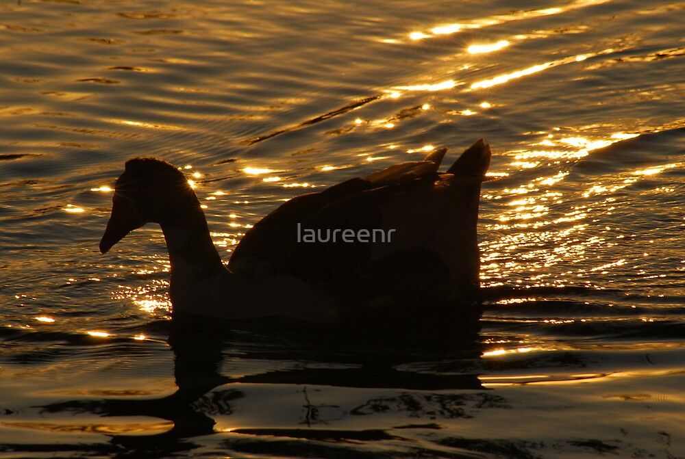 As the sun sets by laureenr