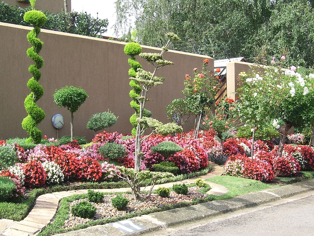 The pavement garden by Tugela