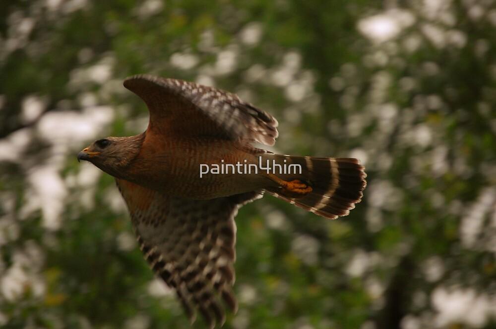 Hawk Flight by paintin4him