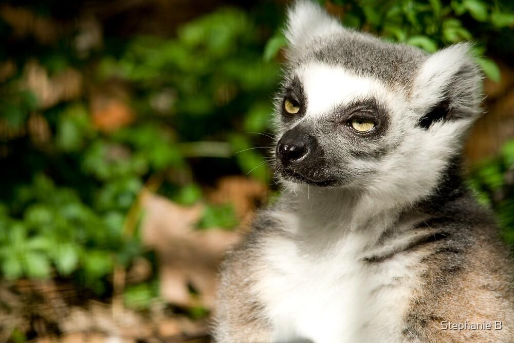 Sunlit Lemur by Stephanie B