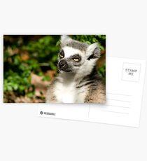 Sunlit Lemur Postkarten