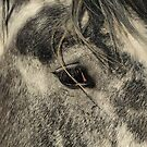 Grey is Gorgeous! by Donna Ridgway