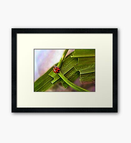 red and black lady bug on a mission  Framed Print
