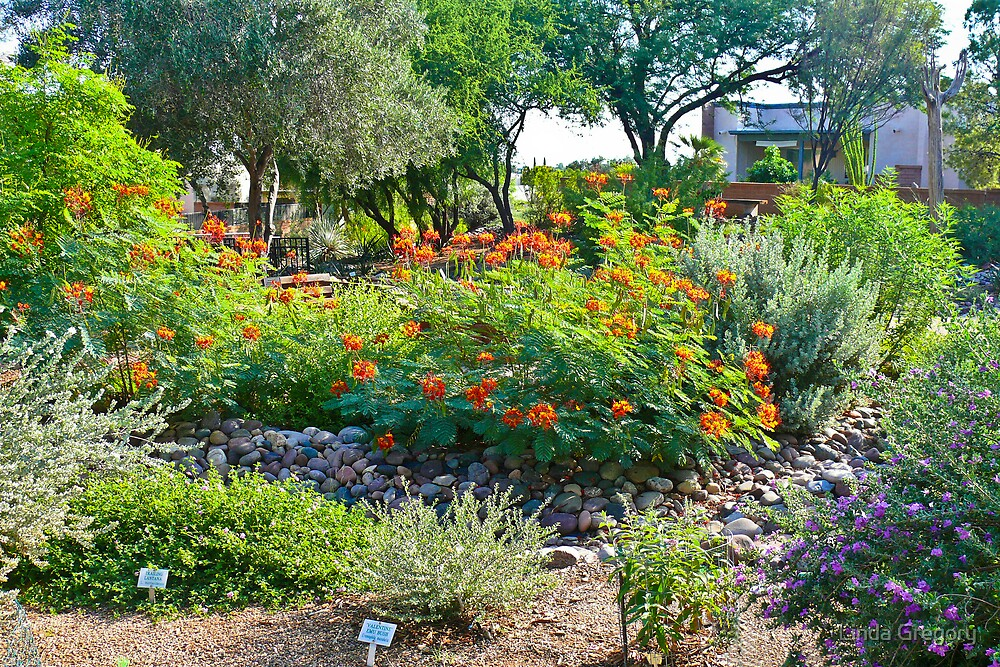 Green Valley Gardeners' Arid Garden by Linda Gregory
