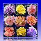 Neun Rosen Collage von BlueMoonRose