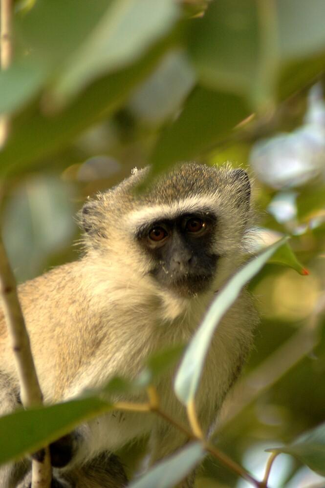 Monkey Buisness by DUNCAN DAVIE