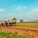 Amish Farming by KellyHeaton