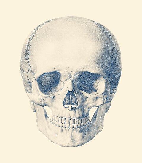 Voller menschlicher Schädel - Frontansicht - Vintage Anatomie ...